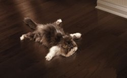 Підлогове покриття якщо в квартирі тварини